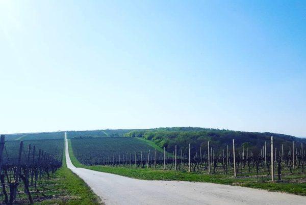 vinske ceste Baranja