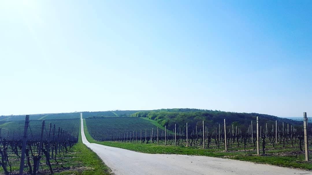 Vinske ceste